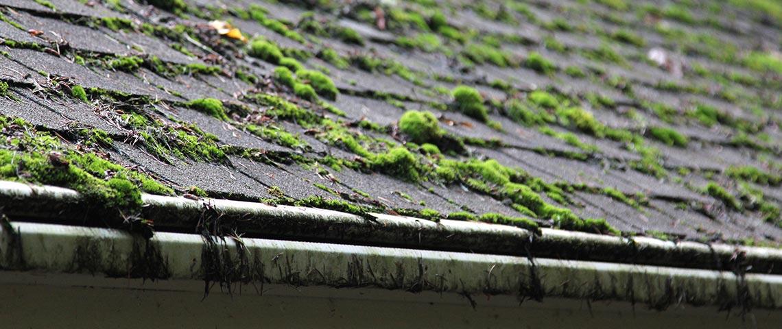 moss-roof.jpg